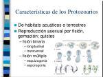 caracter sticas de los protozoarios4