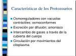 caracter sticas de los protozoarios6