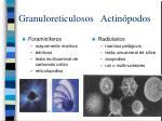 granuloreticulosos actin podos