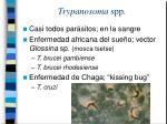 trypanosoma spp