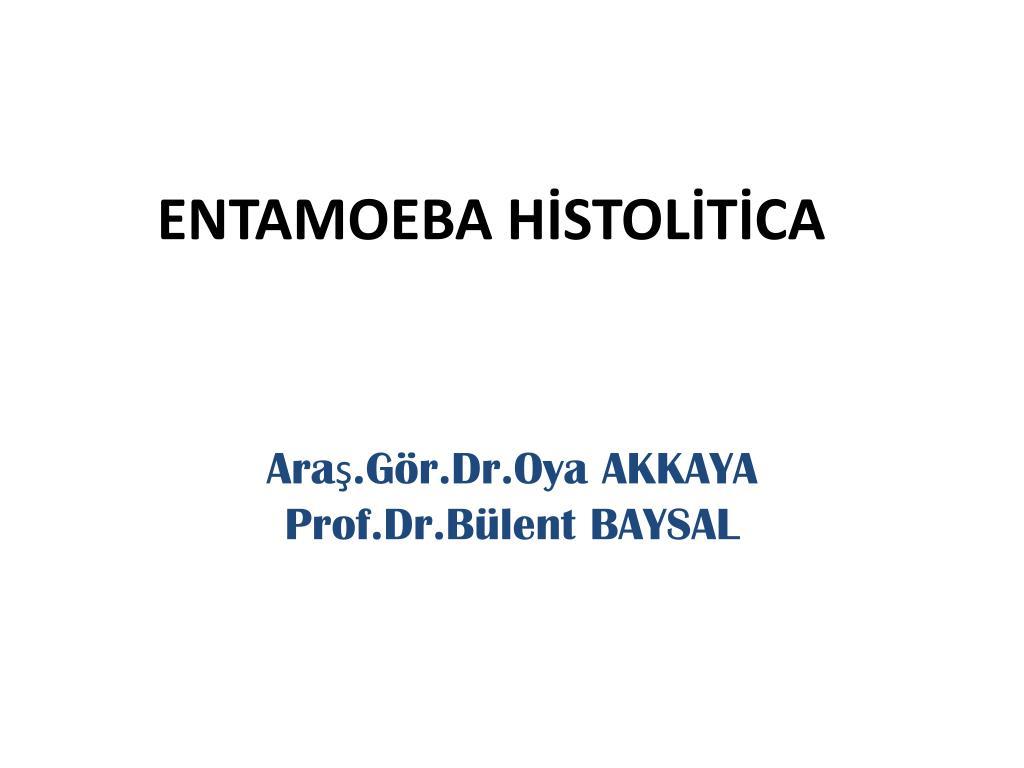 Gaitada Maya Hücresi