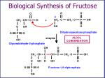 biological synthesis of fructose