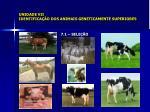 unidade vii identifica o dos animais geneticamente superiores2