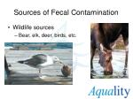sources of fecal contamination2