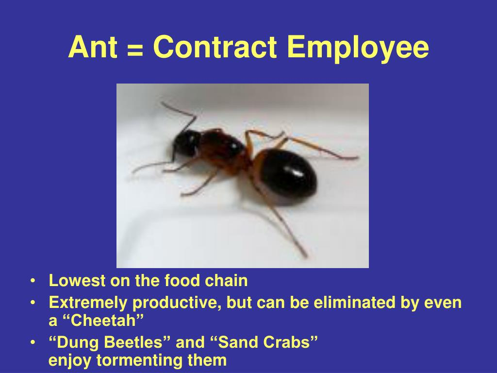 Ant = Contract Employee
