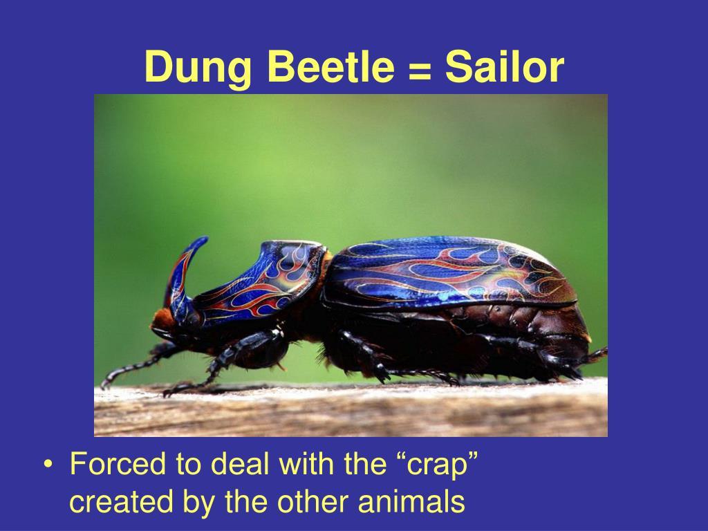 Dung Beetle = Sailor