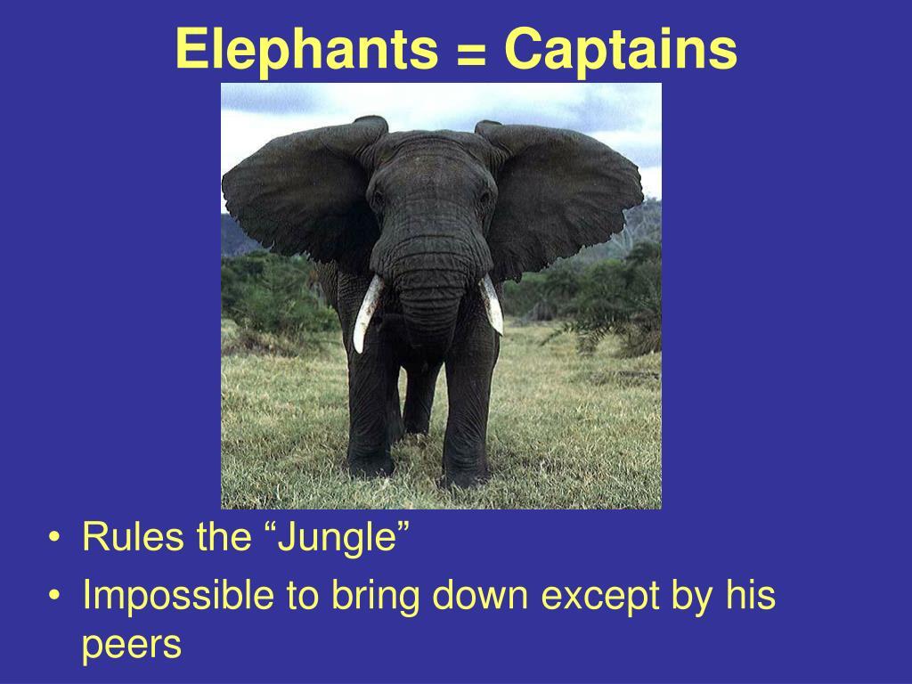 Elephants = Captains