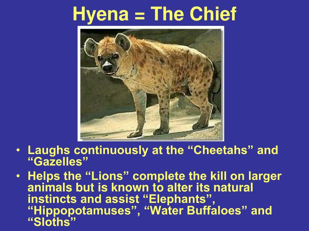 Hyena = The Chief