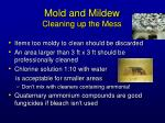 mold and mildew cleaning up the mess
