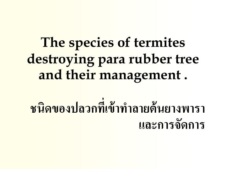 the species of termite s destroying para rubber tree and their management n.