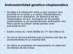 androesterilidad gen tico citoplasm tica