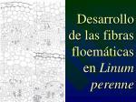 desarrollo de las fibras floem ticas en linum perenne
