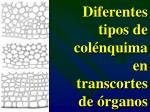 diferentes tipos de col nquima en transcortes de rganos