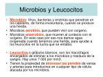 microbios y leucocitos