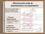 diferencia entre ondas de despolarizaci n y de repolarizaci n
