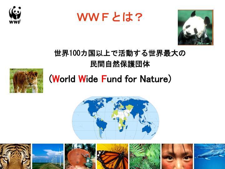 WWFとは?