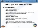 what you will need to report2