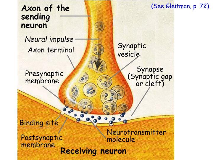 Neural impulse