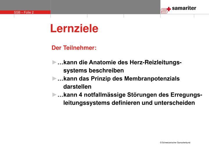 PPT - Das Reizleitungs-System des Herzens PowerPoint Presentation ...