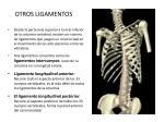 otros ligamentos
