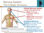 nervous system the 2 major divisions