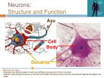 neurons structure and function1