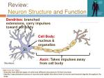 review neuron structure and function