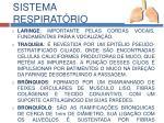 sistema respirat rio3