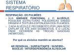 sistema respirat rio4
