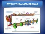 estructura membranas