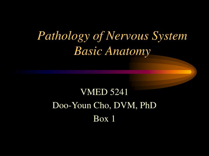 pathology of nervous system basic anatomy n.