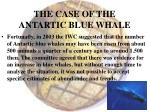 the case of the antartic blue whale33