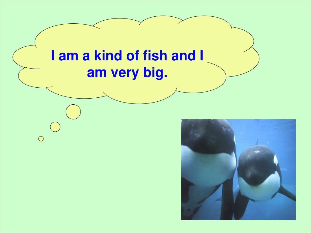 I am a kind of fish and I am very big.