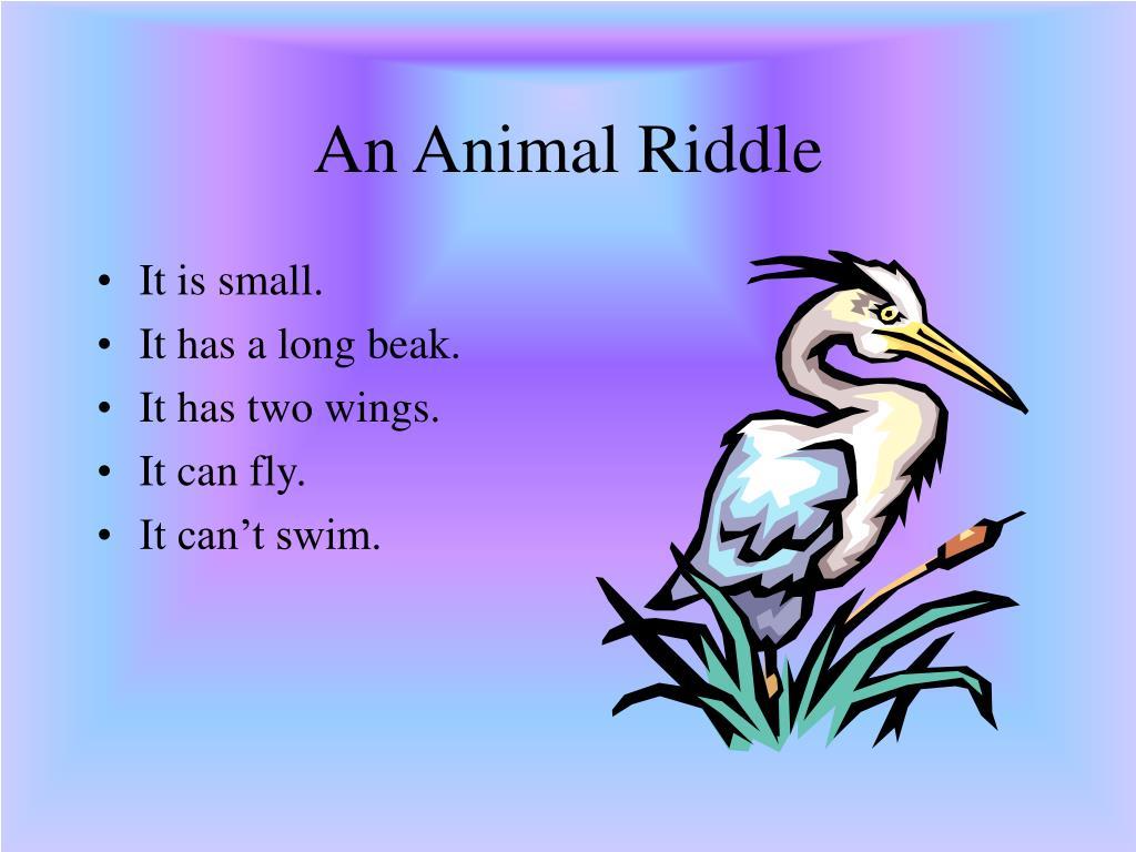 An Animal Riddle
