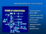 myeloprol ferat f hastaliklar1