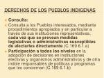 derechos de los pueblos indigenas12
