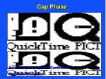 cap phase