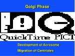 golgi phase