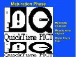 maturation phase