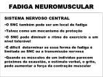 fadiga neuromuscular3