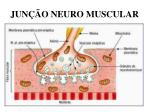 jun o neuro muscular