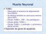muerte neuronal