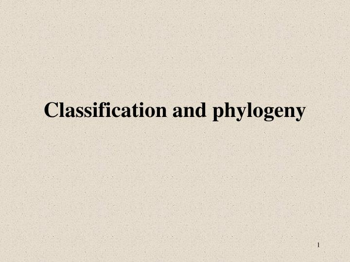classification and phylogeny n.