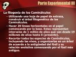 parte experimental iii