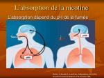 l absorption de la nicotine