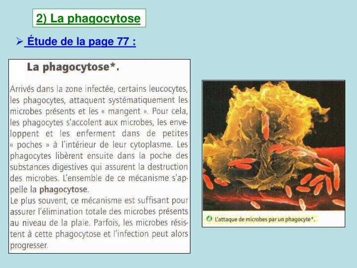 2) La phagocytose