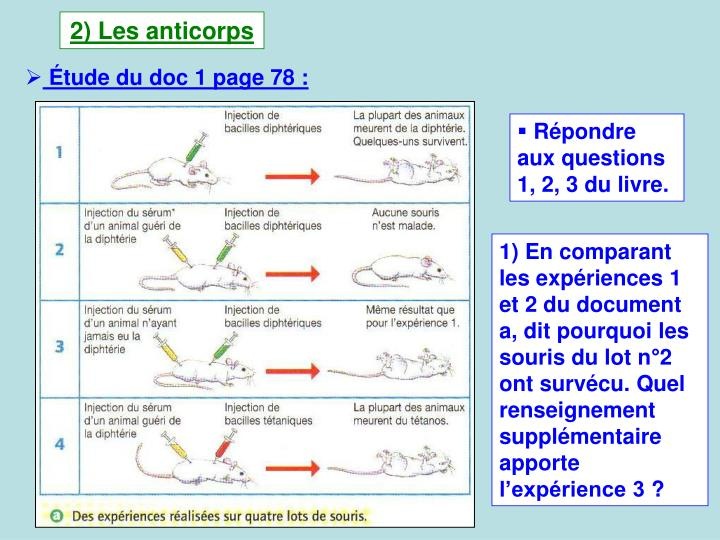 2) Les anticorps