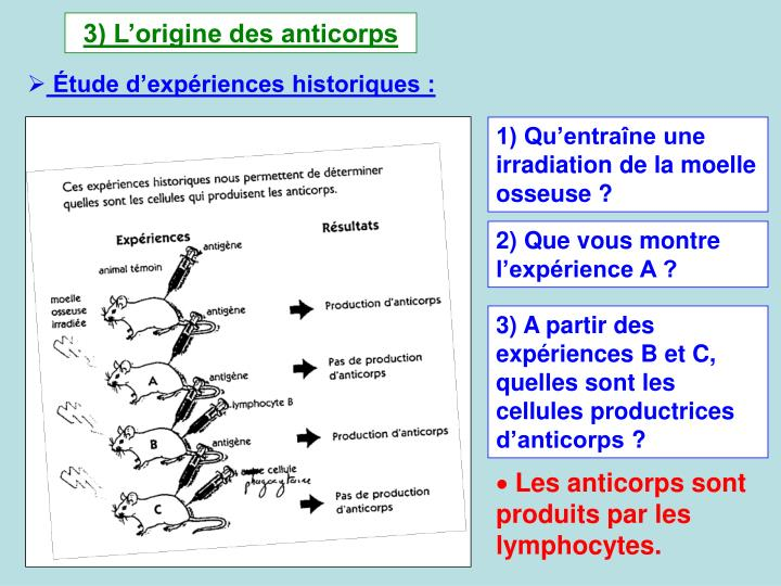 3) L'origine des anticorps