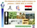 development of tuber moth resistance in potatoes absp msu ageri