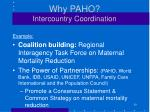 why paho intercountry coordination